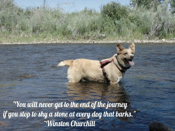 """You will never get to the end of the journey if you stop to shy a stone at every dog that barks"""